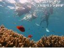 【沖縄・恩納村】完全貸切り:クマノミシュノーケリングツアー(ボートエントリー)の様子