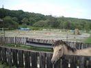 【北海道・北広島】体験乗馬(約30分)の様子