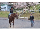 【群馬・利根川】体験乗馬+パカパカ散歩(外乗)の様子