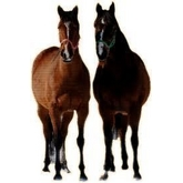スパイス乗馬倶楽部(Spice Horse Riding Club)