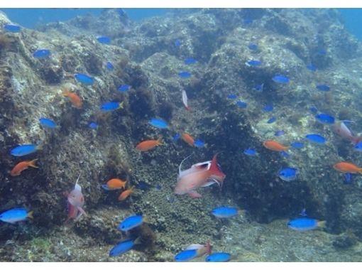 アクアフェイスダイビングスクール(Diving School Aqua Faith) のギャラリー
