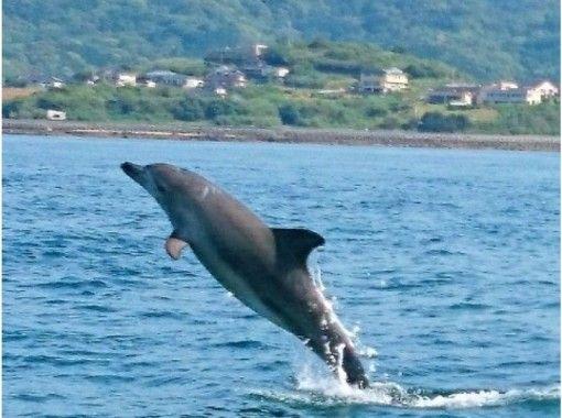 天草ドルフィンクルーズ(Dolphin Cruise) のギャラリー
