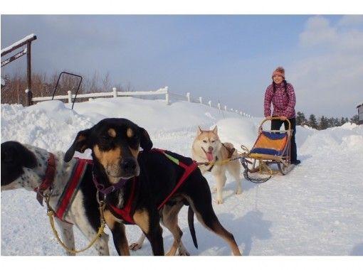 Hokkaido Great Adventure のギャラリー
