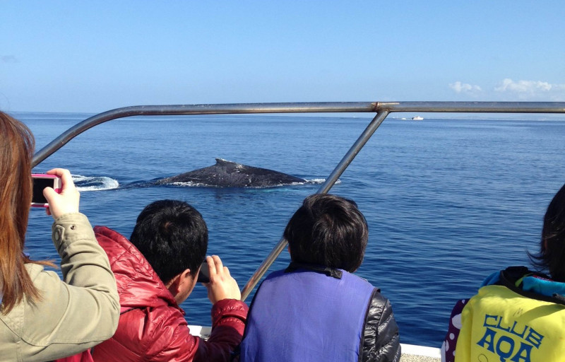 Okinawa Whale Watching South to South