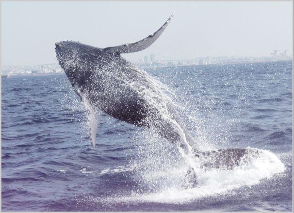 沖縄sea world おすすめ