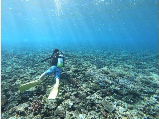 BeNatural 潜水和瑜伽 のギャラリー