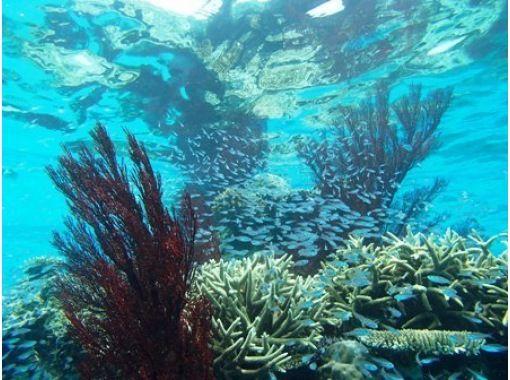 ブルーラグーン石垣島(Blue Lagoon) のギャラリー