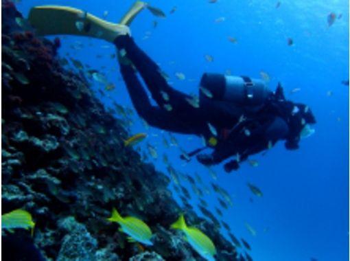DiveService BlueGate(ダイブサービスブルーゲイト) のギャラリー