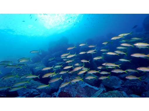 ディープマリン深島 のギャラリー