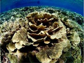 【沖縄・宮古島】奇跡の珊瑚礁で感動体験!【池間島・大神島】わくわくシュノーケルコース(水中観光船付)の画像