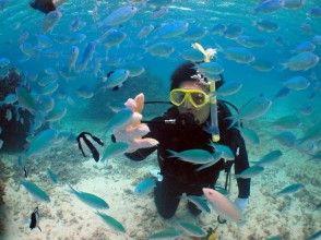 【沖縄・宮古島】美しい水中世界へご案内! 体験ダイビングコース(ビーチダイブ)の画像