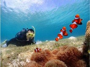 [Okinawa Miyakojima] anemone fish & coral Watching (Beach snorkel course)