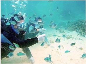 【沖縄県・国頭郡】瀬底島体験ダイビング【ビーチエントリー】の画像