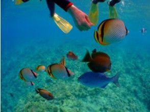 [冲绳- 蓝洞]五星评价许多★热带鱼享受浮潜★照片·动画当场送到智能手机♪