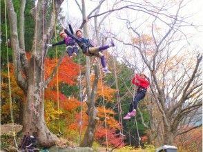 樹上満喫 木のぼりツアーの画像