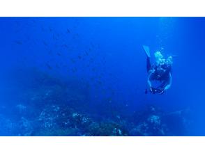 【福井・音海】透き通る視界30メートル!夏の日本海<冠島・浅グリ>2ダイビング!