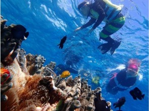 【Okinawa · Miyakojima】 Join us if you have bathing suits! Experience diving