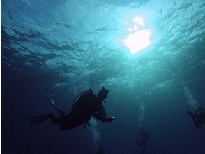 【沖縄・与那国】地形派、ウォッチ派、あらゆるリクエストに応えます!1日ファンダイビングの画像