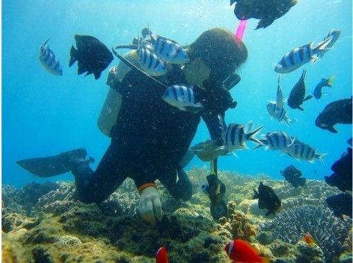 【沖縄・那覇】熱帯魚が目の前に!体験ダイビング(砂辺ポイント)の紹介画像