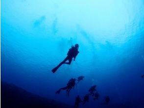 【沖縄・与那国】ライセンスがなくても大丈夫!海底遺跡もご案内♪体験ダイビングの画像
