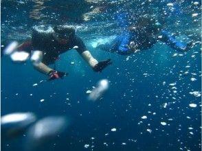 【静岡・伊東】おススメ大人気!体験ダイビングの画像