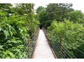 【福島・裏磐梯】草花や巨樹を楽しもう!桧原湖畔探勝路トレッキングの画像