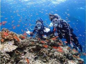[Okinawa Ishigaki Island] Beginners welcome! Enjoy the stone wall of the sea! Diving
