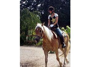 【山梨・北杜】初心者、親子連れOK!基本乗馬コース レッスン、馬場駈歩、引き馬、親子連れ各コースの画像