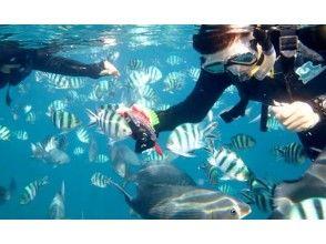 【沖縄・青の洞窟】送迎付き!サンゴ礁・熱帯魚を見にいこう!シュノーケリング体験の画像