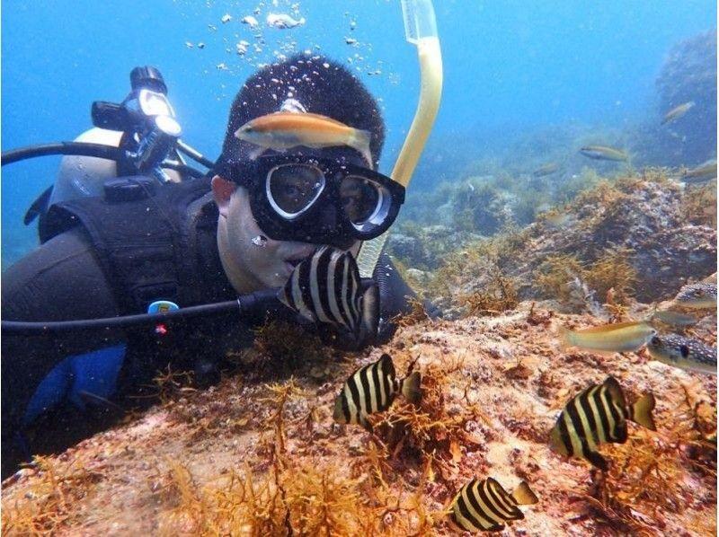 [仙台,山形]潛水員登場!兩天一夜公開水域課程簡介形象(當然許可證)