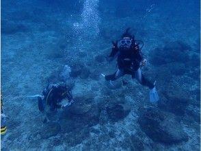 【高知県 柏島】世界各国の海を自由にダイビング!ライセンス講習で一生使える認定書を取得の画像