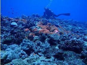 【沖縄・与那国島】海底遺跡・ハンマーウォッチングを楽しむ<Cカード必須・ファンダイビング>の画像
