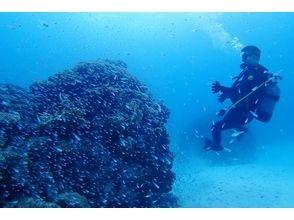 【沖縄・石垣島】お手軽に!体験ダイビング(半日コース)の画像