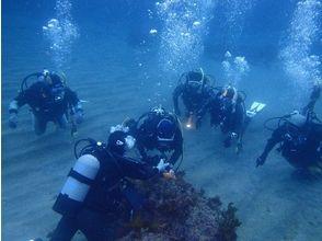 【静岡・伊豆】初心者・お子さま大歓迎!海で体験ダイビング(1日コース)の画像