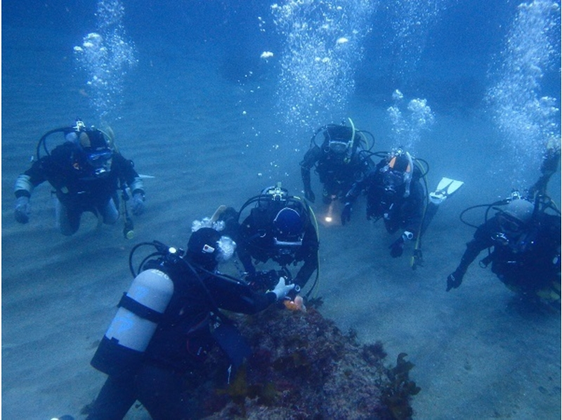 [Shizuoka ・ Izu】 Beginners, children are welcome! Experience at sea Diving(One day course)