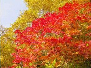 【長野・信州信濃】トレッキング(高谷池・天狗の庭プラン)の画像