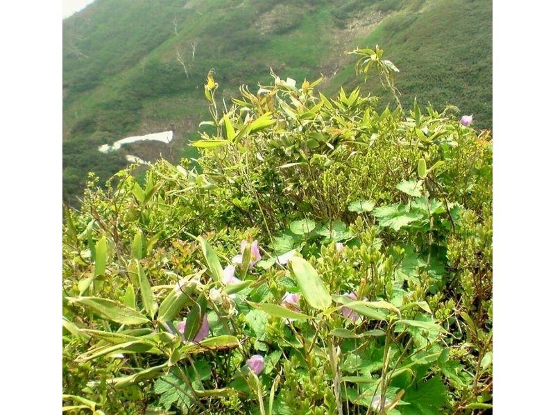 【長野・信州信濃】トレッキング(雨飾山プラン)の紹介画像