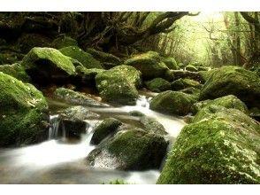 【鹿児島県・屋久島】苔の森ショートトレック(半日)の画像
