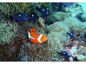 【沖縄・宮古島】珊瑚と熱帯魚を満喫しよう!池間島でシュノーケリング&フィッシング体験の画像