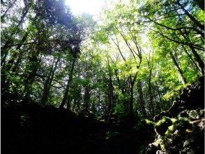 青木ヶ原樹海トレイルウォーク『躍動の森 富士山原生林を歩く』の画像