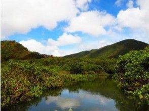 【鹿児島・奄美大島】体験ダイビング&マングローブカヌー1DAYツアーの画像