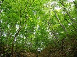 【青森・白神山地】トレッキング/ブナ林散策道満喫コースで神秘の自然を五感で感じる!