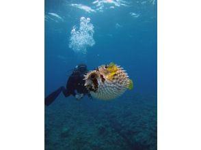 【沖縄・座間味】慶良間諸島・美しい座間味の海でファンダイビング(1ダイブ・2ダイブ)の画像