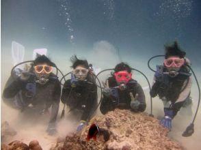 【沖縄・座間味】学割あり!慶良間諸島・美しい座間味の海で体験ダイビングの画像
