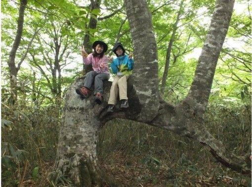 【岡山・蒜山】見所一杯感動一杯!!大藪漕ぎと巨木巡りトレッキング