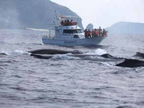[沖繩座間味]讓我們來看看在附近的鯨!觀鯨(一個療程)的圖像