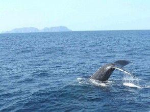 """[沖縄座間味]遊覽Tonaki座間味!讓我們看看附近的鯨魚!鯨魚觀賞"""" B套餐"""""""