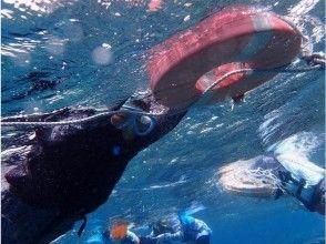 [沖繩宮古島]隨意嘗試允許的!八重Hise的圖像(Yabiji)半日船浮潛遊