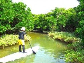 【沖縄北部・やんばる】マングローブの森・探検クルージングコース(150分)