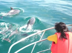 [Kumamoto Amakusa] Let's go to love the wild dolphins! Dolphin Watching of image